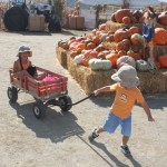 Oma's Pumpkin Patch at the Van Ommering Dairy ~ Fall Fun For All!