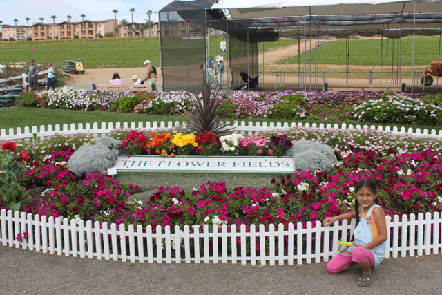 The Carlsbad Flower Fields ~ www.socalwithkids.com