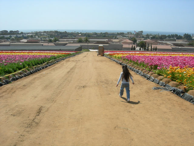 Fun at the Carlsbad Flower Fields ~ www.socalwithkids.com