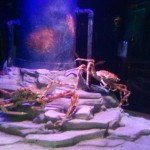 sealifecrabs