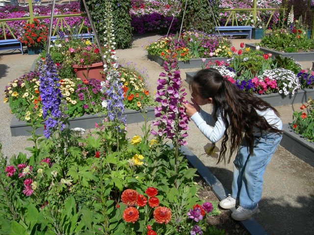 Artist Garden at the Carlsbad Flower Fields ~ www.socalwithkids.com