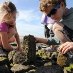 Living Coast Discovery Center Invites You To Celebrate Coastweeks!