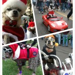 Family Friendly Holiday Festivities in San Diego