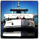 San Diego Whale Watching with Flagship Cruises and Birch Aquarium Naturalists!
