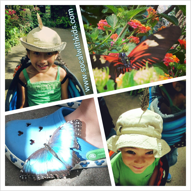 butterfly_jungle