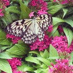 We love Butterfly Jungle at the Safari Park! ~ www.socalwithkids.com