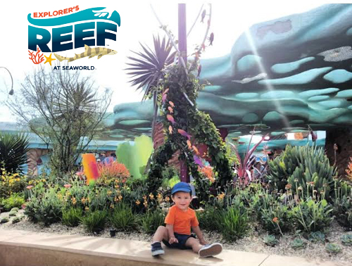 Explorer's Reef at SeaWorld