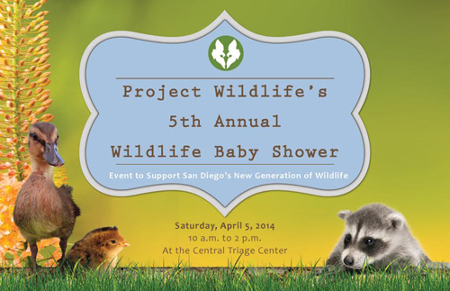 Project Wildlife Baby Shower