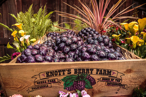 Knott's Boysenberry Box