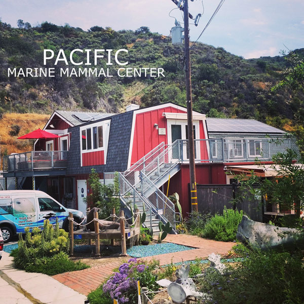Explore and Learn At Pacific Marine Mammal Center In Laguna Beach