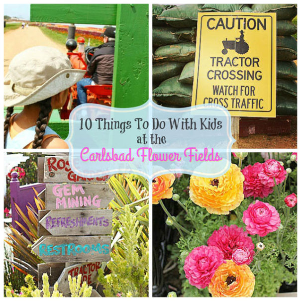 10 Things To Do With Kids at the Carlsbad Flower Fields