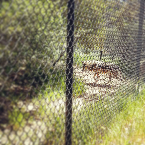 Mexican Wolf - www.socalwithkids.com