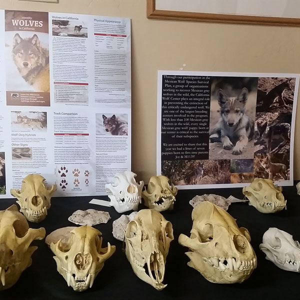 Skulls at California Wolf Center - www.socalwithkids.com