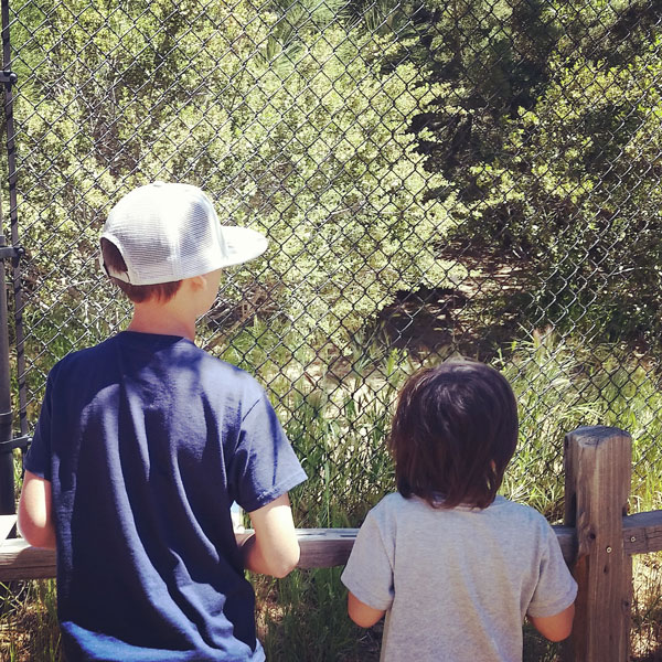 Watching Wolves - www.socalwithkids.com